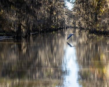 Caddo Lake 2020-665
