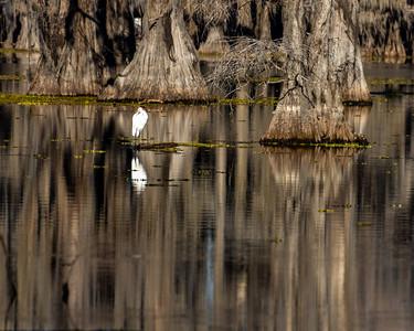Caddo Lake 2020-294