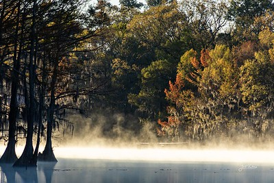 Caddo Lake 2020-8