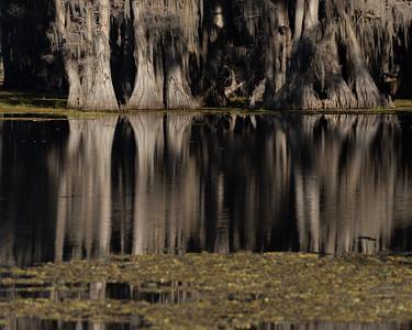 Caddo Lake 2020-331
