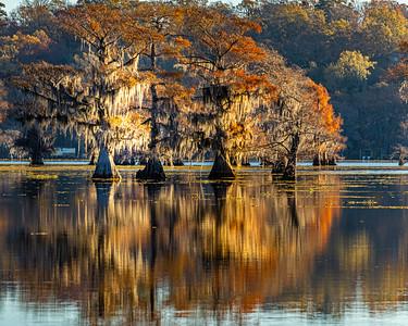 Caddo Lake 2020-57