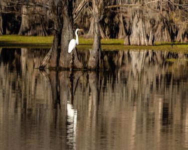 Caddo Lake 2020-262