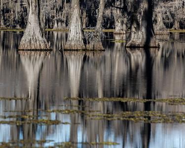 Caddo Lake 2020-329