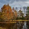 Bald Cypress in Lake Bob Sandlin State Park