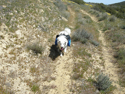 "Sheila ""doggedly"" hiking onward. We'd give her squirts of water from our hydration bladders, which made for very little wasted water; she seemed to enjoy it too."