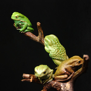Waxy monkey tree frog (Phyllomedusa sauvagii)