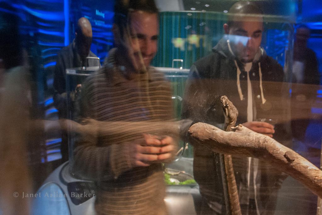 snake-05
