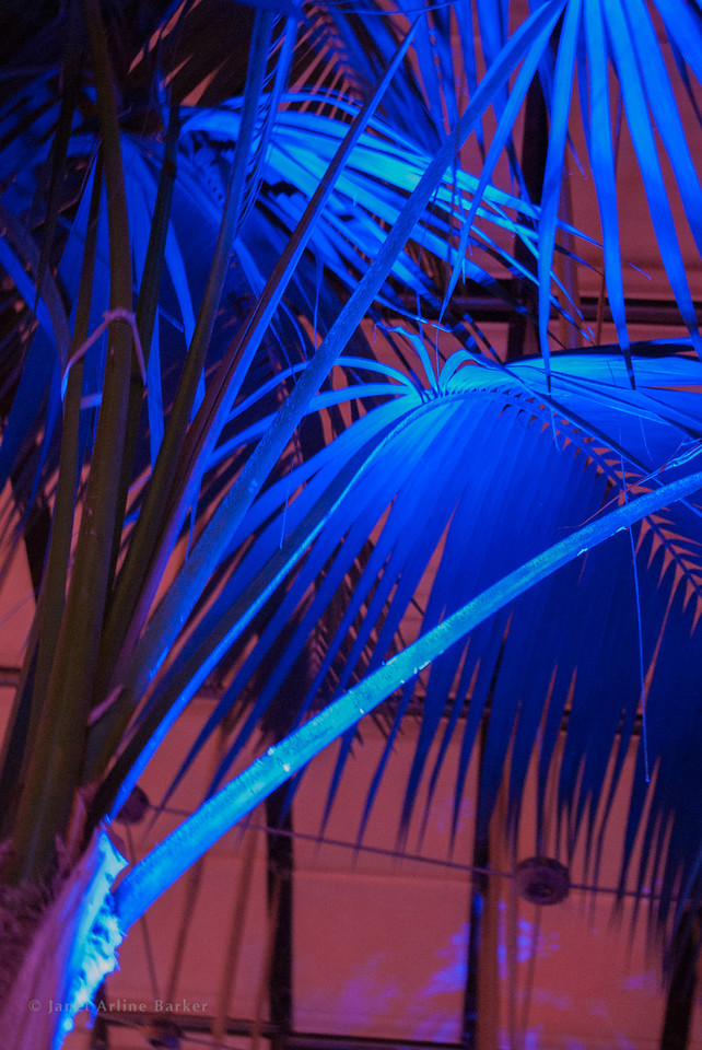 Dancing palms-5