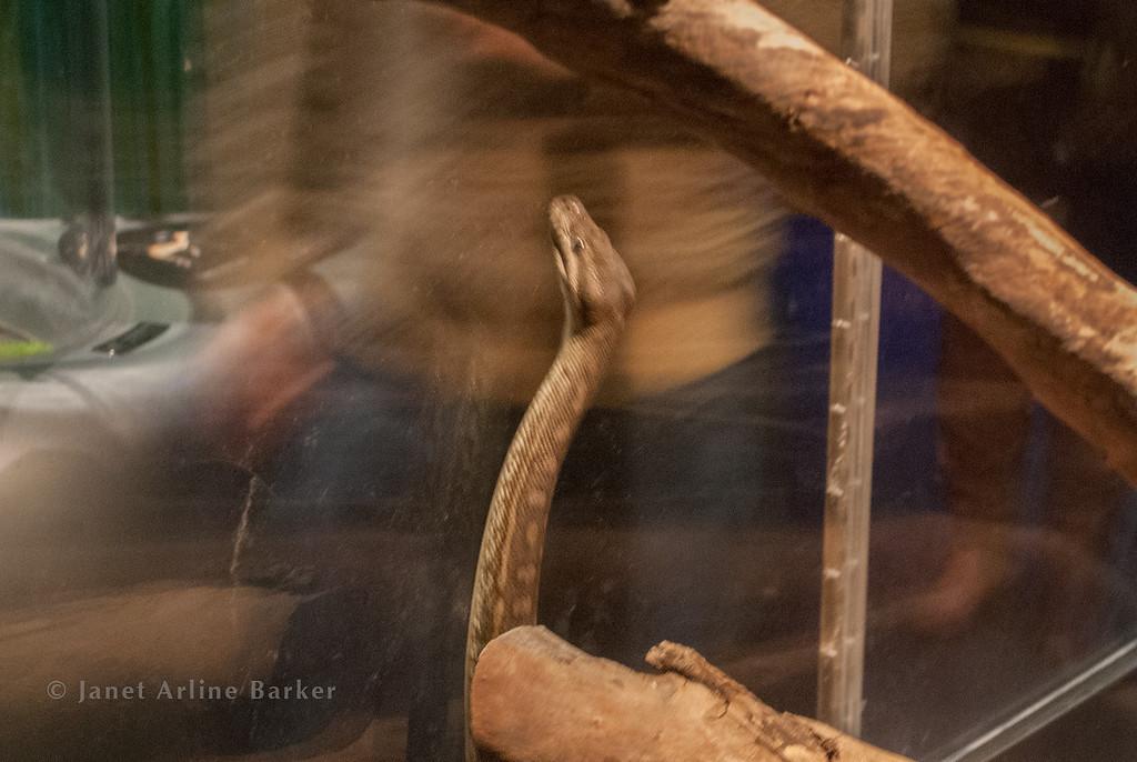 snake-03
