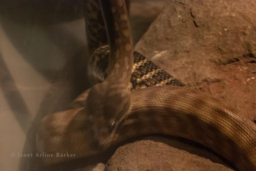 snake-17