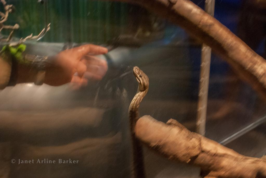 snake-02