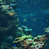 ocean, aquarium, reef, fish, swim, dive, scuba