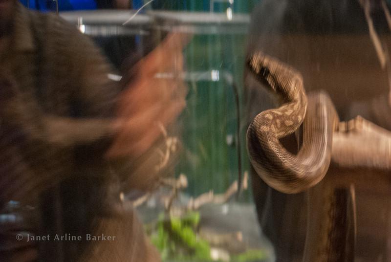 snake-11