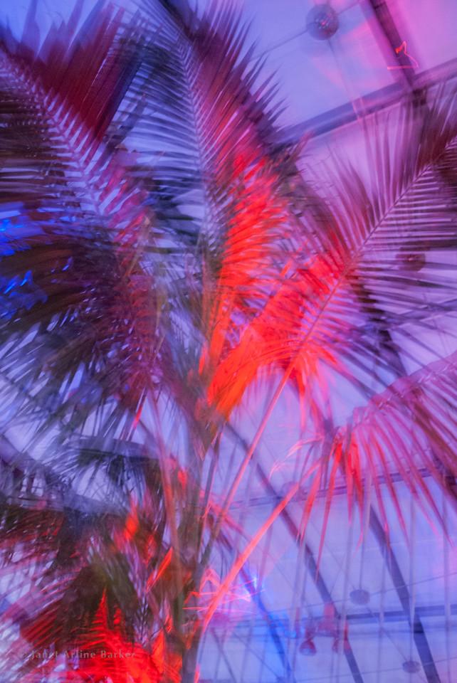 Dancing palms-2