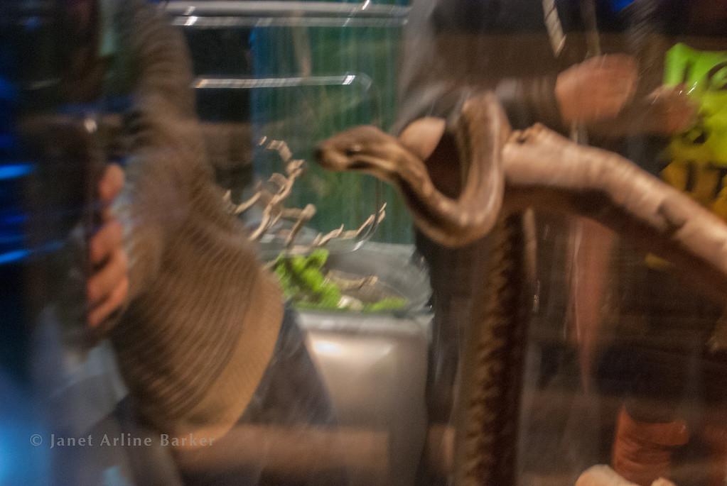 snake-10