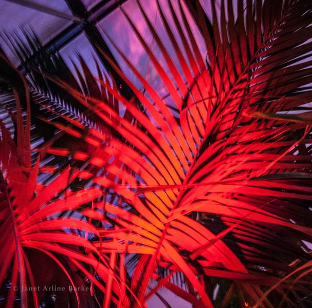 Dancing palms-4