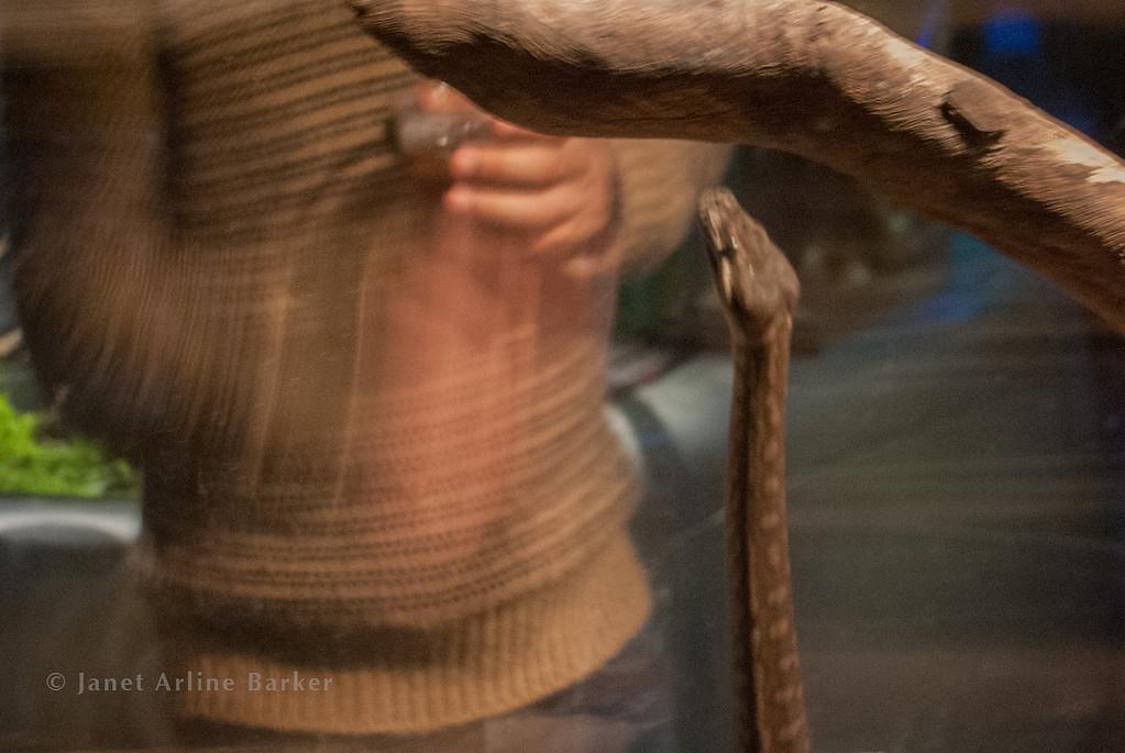 snake-04