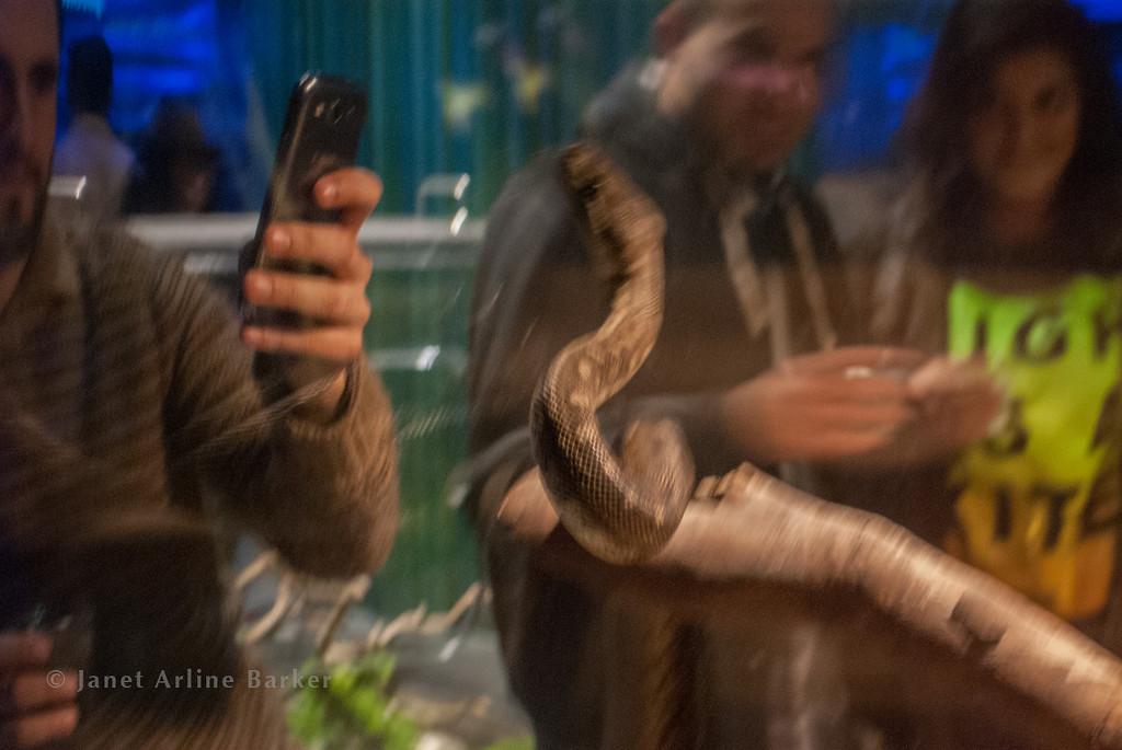 snake-12