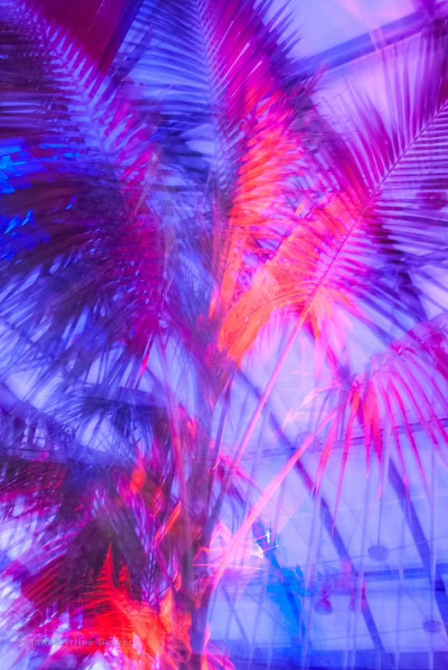 Dancing palms-1