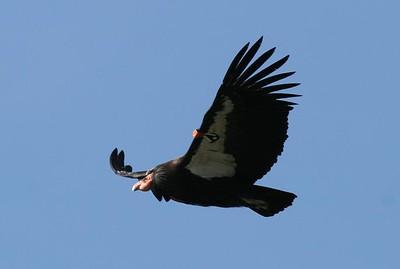 Bird #171, March 2007