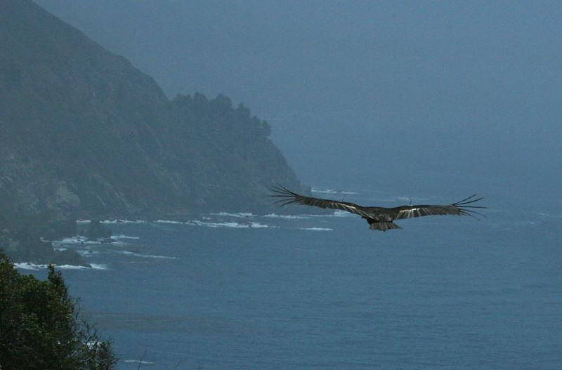 Big Sur Coastline, 5-22-07
