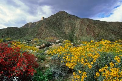 Anza Borrego Desert. 28_0316982