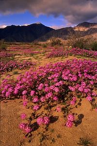 Anza Borrego Desert. 11-022398 2