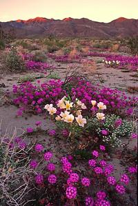 Anza Borrego Desert 24_030298
