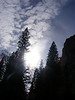 Trees and sky in Yosemite Valley