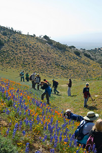 Photographers shooting California Wild Flowers