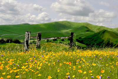 Spring in the Central Sierra Foothills