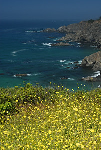 © Joseph Dougherty.  All rights reserved.   California coast  with wildflowers and rocky cliffs.