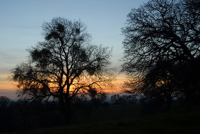 © Joseph Dougherty.  All rights reserved.   Silouette of an oak tree at sunset.