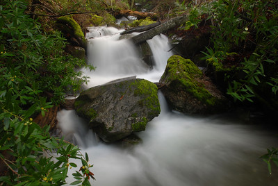 © Joseph Dougherty. All rights reserved.   Donner Creek cascading through the upper portion of Donner Canyon on the north slope of Mt. Diablo, past Bay Laurel trees, Umbellularia californica.