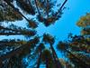 Tree Circle<br /> Yosemite NP, CA
