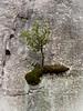 Yosemite Cliff Dweller<br /> Yosemite NP, CA