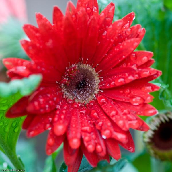 Callaway Gardens 2008-1104