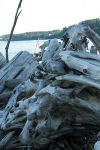 xfs_500x400_s80_Camano Island with Blu 06-18-2014-29