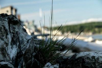 xfs_500x400_s80_Camano Island with Blu 06-18-2014-12