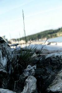 xfs_500x400_s80_Camano Island with Blu 06-18-2014-13