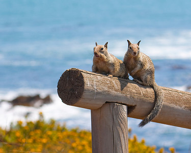 Moonstone Beach residents