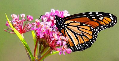 Monarch  08 06 10  056 - Edit