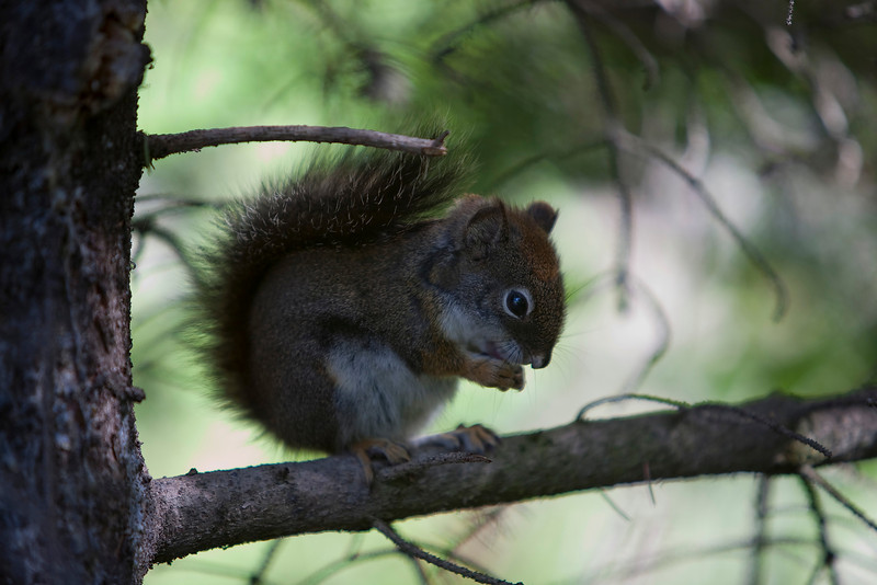 Squirrell 2