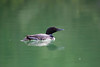 Loons 081609_7