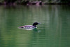 Loons 081609_5