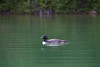 Loons 081609_2