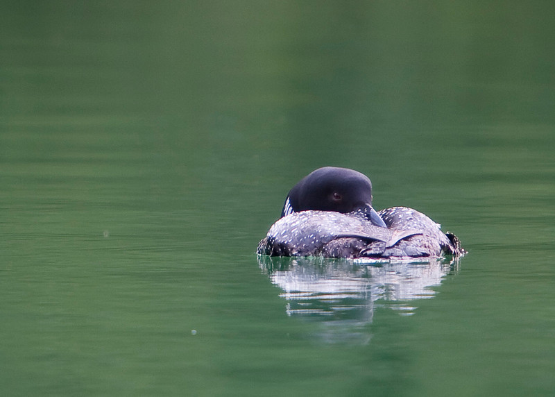 Loons 081609_6