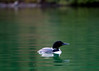 Loons 081609_3