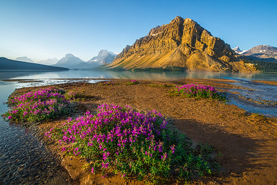 Wildflowers and Bow Mountain Early Morning