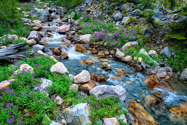 Stream at Edith Cavell Meadows